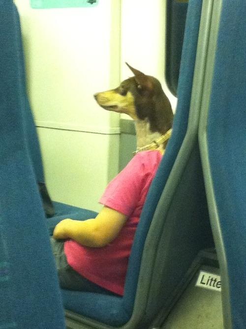 dog_on_train_080714