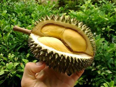 durian_fruit_250714