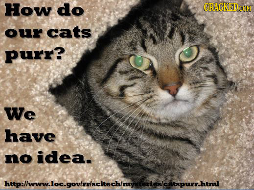 how_do_our_catts_purr_170714