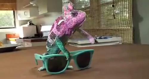 impressive_chameleon_110714b