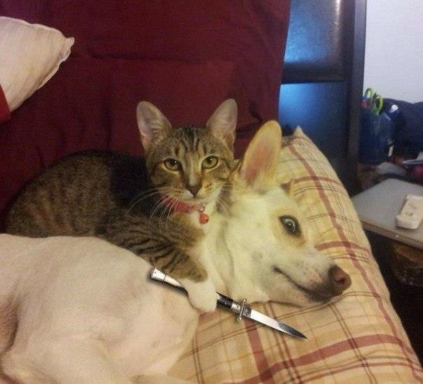 cat holding dog at knifepoint