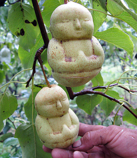 special_shaped_fruits_22814_7