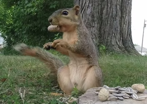 squirrel_humps_gopro_200814b