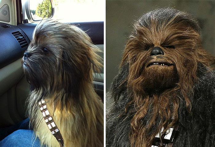 dogs-look-like-something-else-220914_1