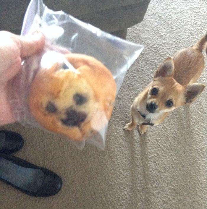 dogs-look-like-something-else-220914_10