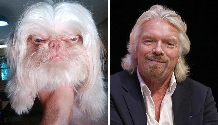 dogs-look-like-something-else-220914_2