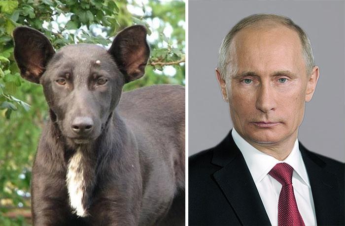 dogs-look-like-something-else-220914_3