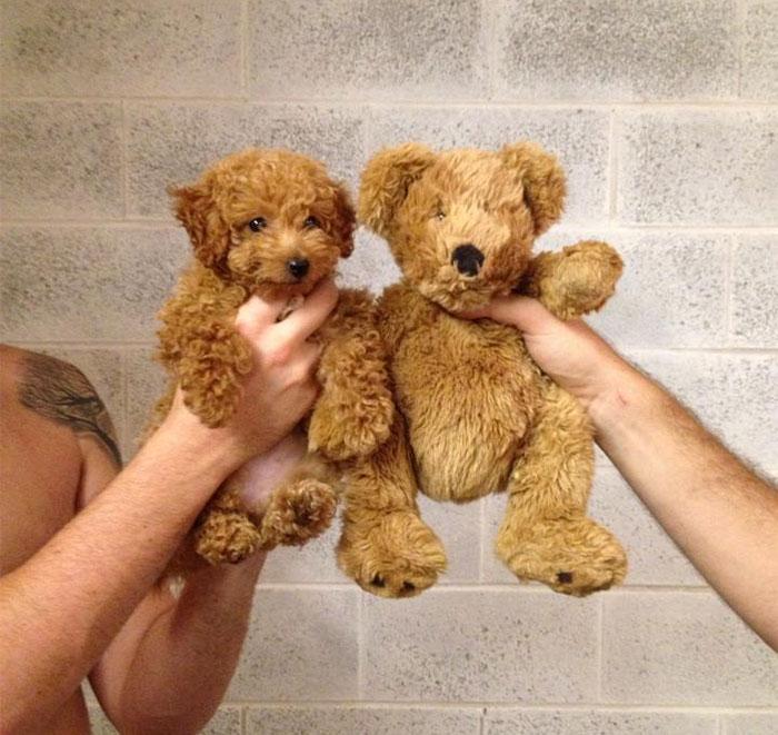dogs-look-like-something-else-220914_4