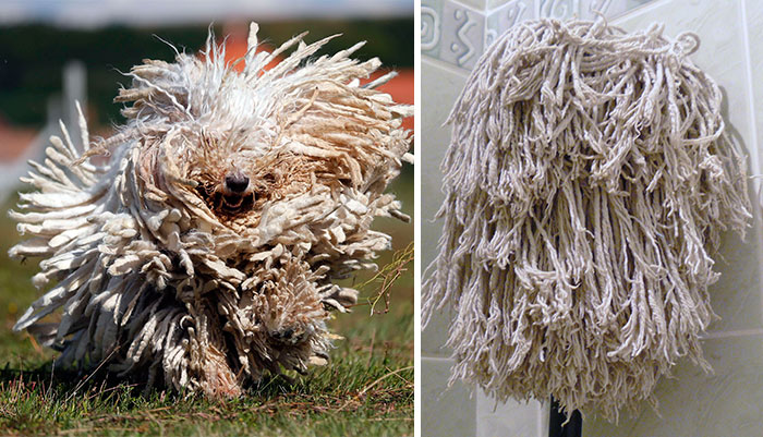 dogs-look-like-something-else-220914_6