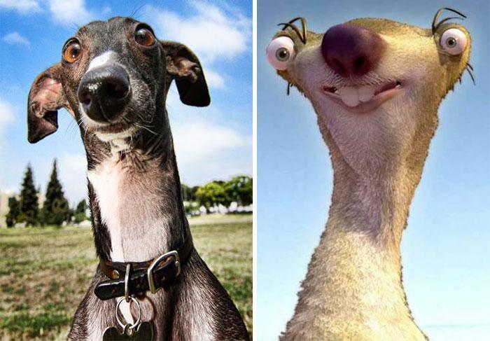 dogs-look-like-something-else-220914_8