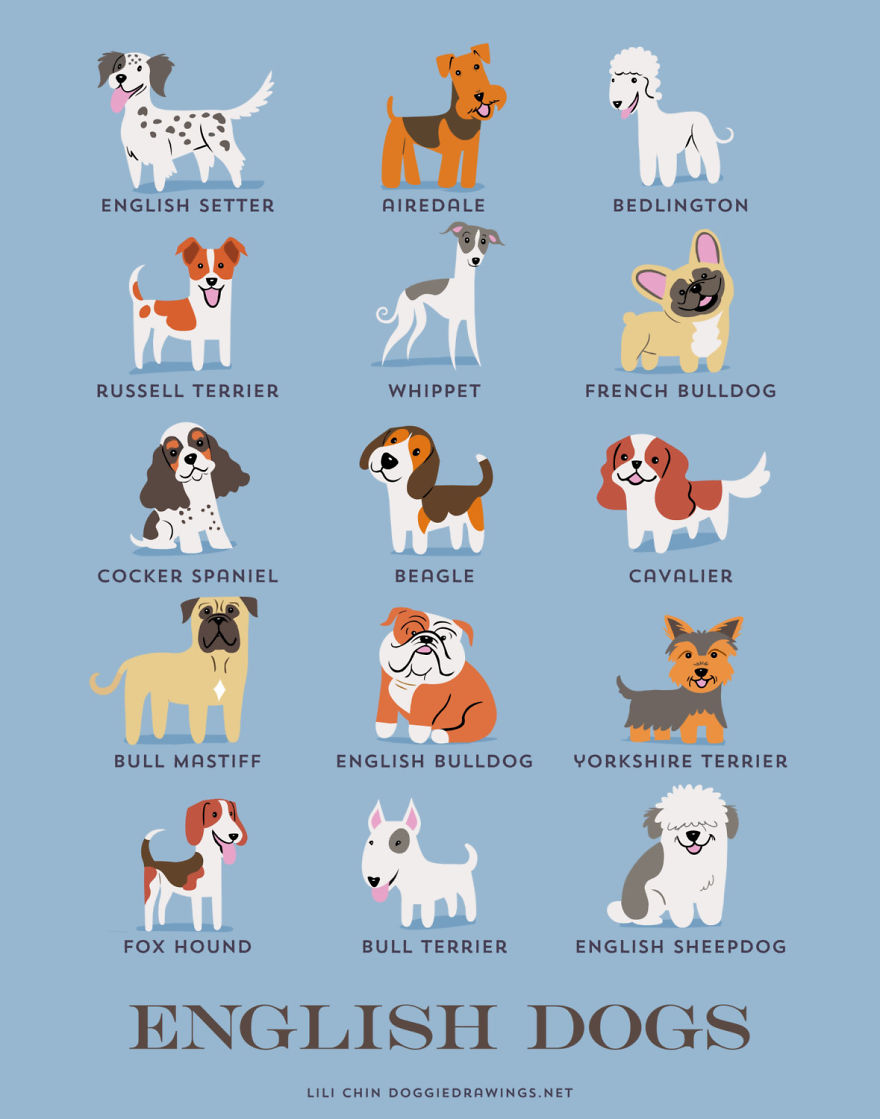 dogs-of-the-world-posters_24094_11