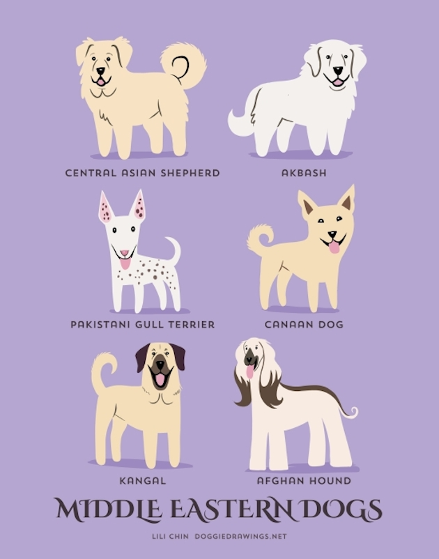 dogs-of-the-world-posters_24094_9