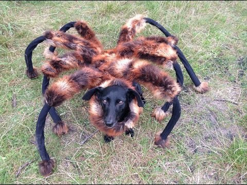 giant-mutant-spider-dog_170914