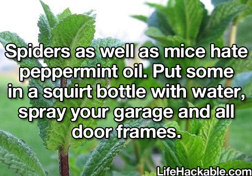some_life_hacks_that_may_be_of_your_interest_3_080914_6