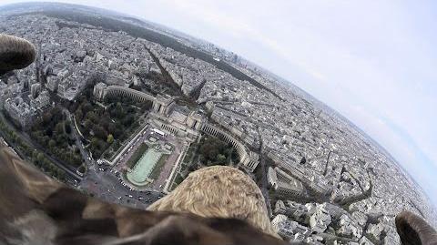 eagle_over_paris_221014s2