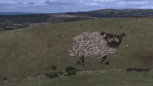 extreme-shepherding_151114b2