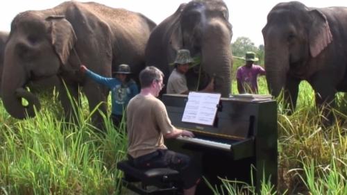 piano-for-elephants_061114b222