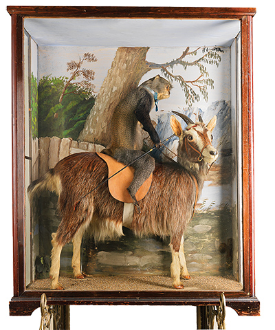 Weird Taxidermy From Victorian Times Earthly Mission