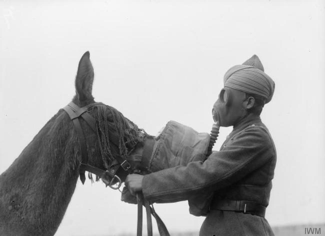 1945. Gas mask being fitted to a mule by a Sikh soldier of the British Indian Army. [c. 1939 - 1945]