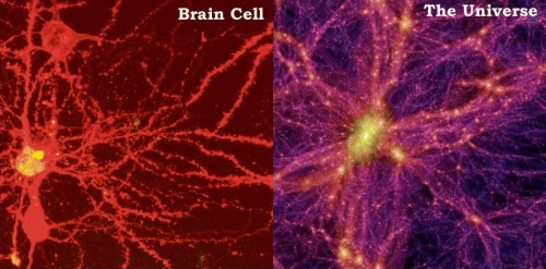 neuron-galaxy_comparison_231214fb23bz