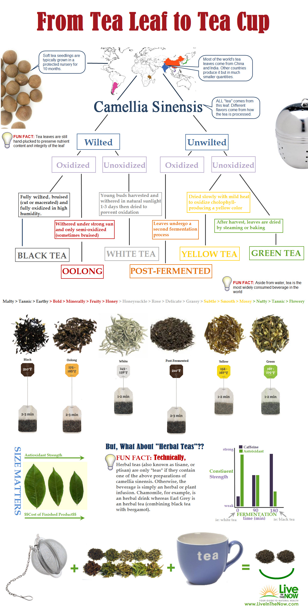 15_cool_infographics_about_tea_170115_3