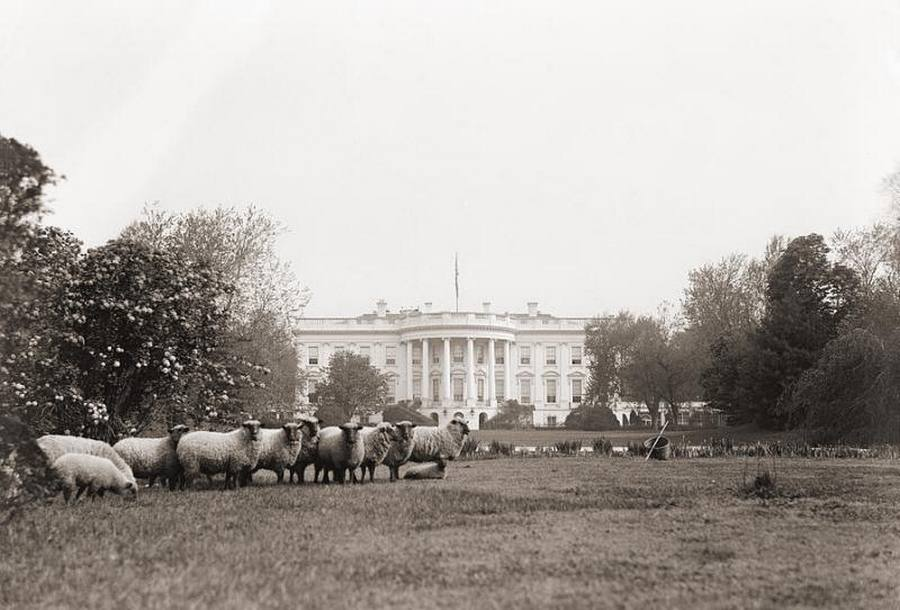 1918_white_house_lawn_mowers