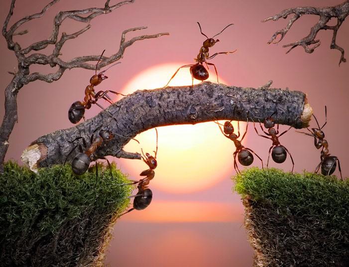 ants-bridge_2160872k