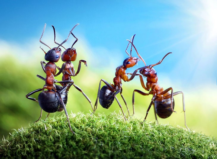 The Fantasy World Of Ants Real Ants Earthly Mission