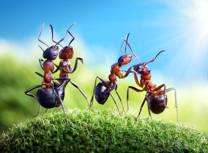 ants-chatting_2160869k