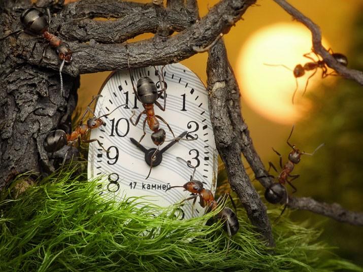 ants-clock_2160868k