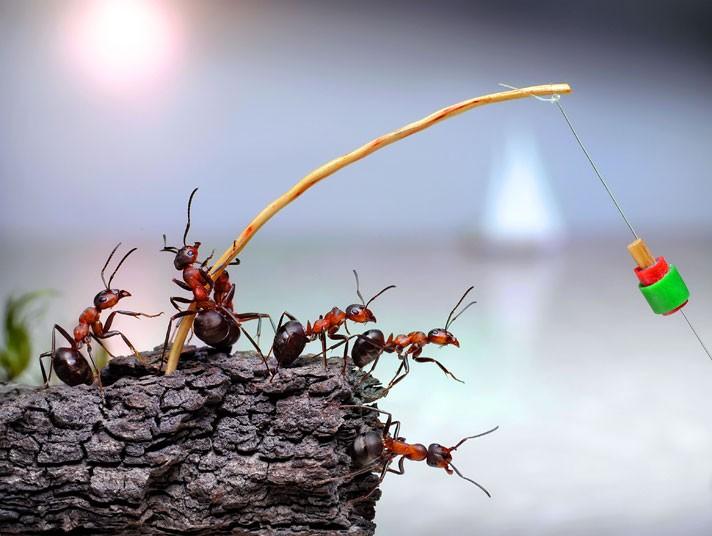ants-fishing_2160866k