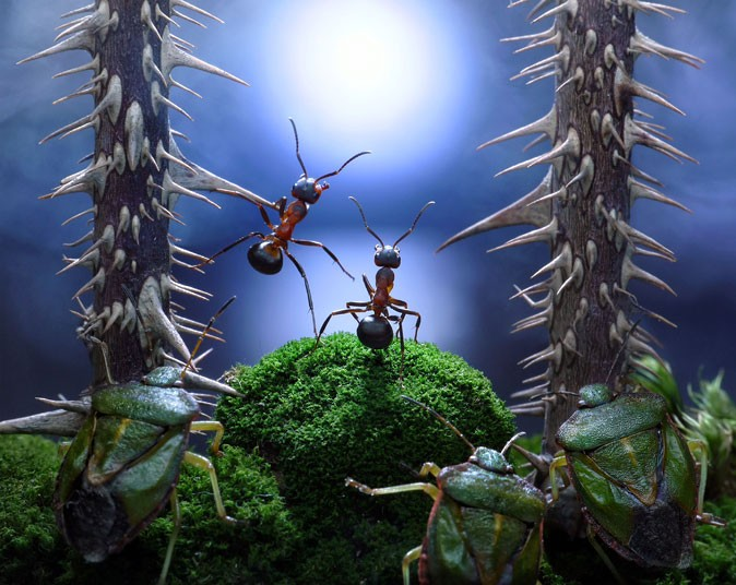 ants-forest_2160865k