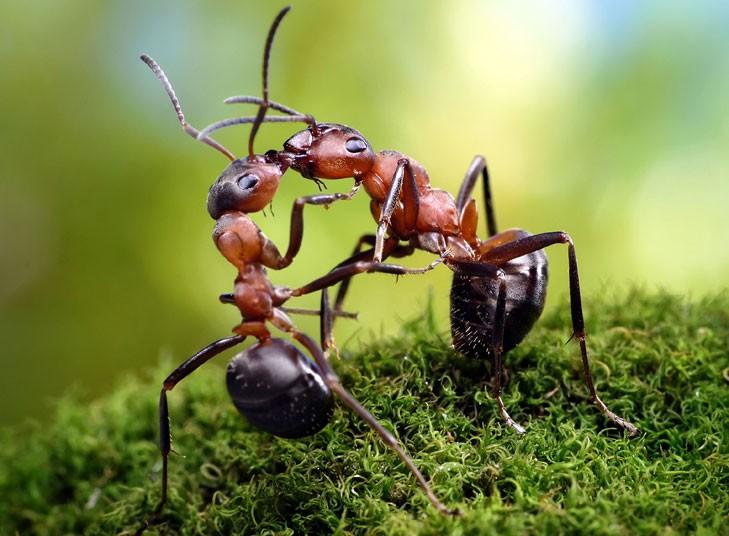 ants-kissing_2160864k