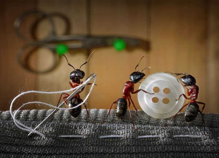 ants-sewing_2160863k
