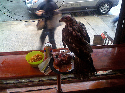 eagle_flies_in_chicken_place_200115_1