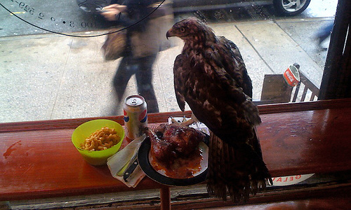 eagle_flies_in_chicken_place_200115_fb2