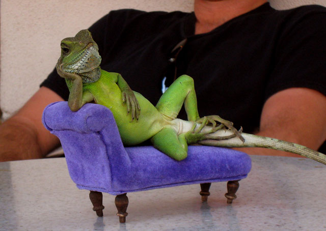 lizard_on_couch_180115