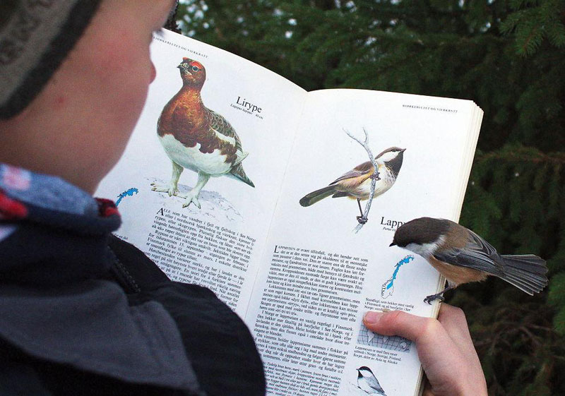 bird-lands-on-page-about-itself-in-bird-book