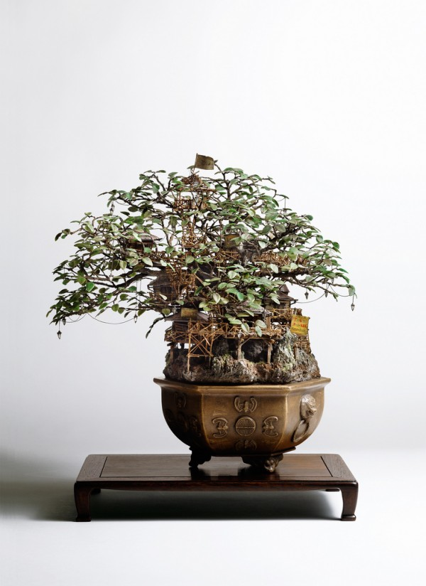bonsai_tree_cities_7