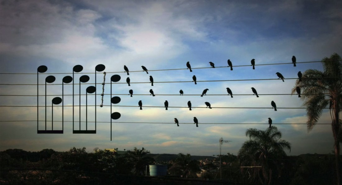 birds-on-a-wire-play-song