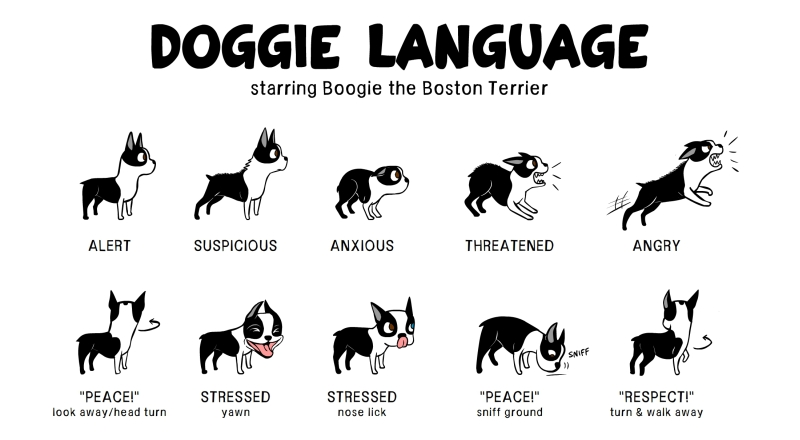 doggie-language-lili-chin_fb