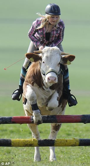 cow-riding-cow-girl2