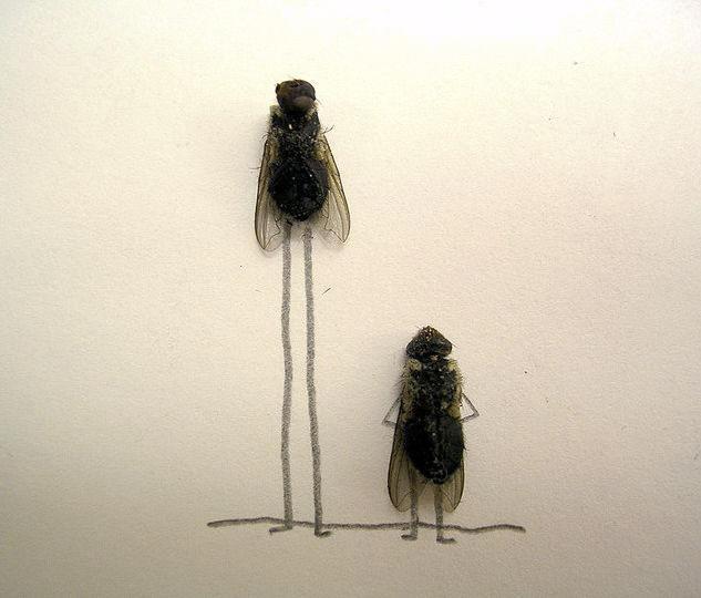 dead-fly-art10