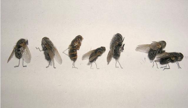 dead-fly-art11