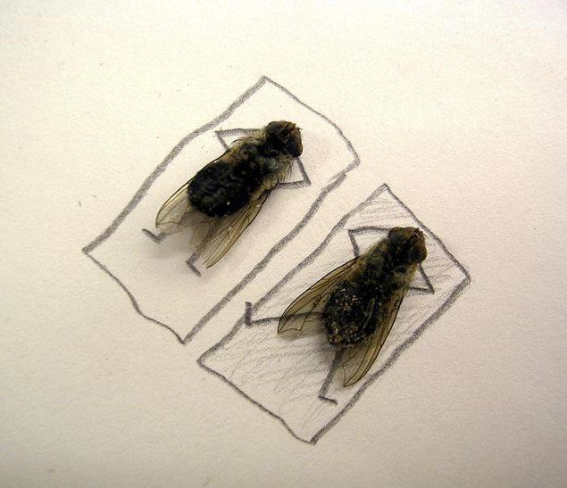 dead-fly-art3