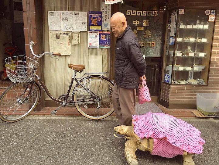 giant-tortoise-for-walk-tokyo-1