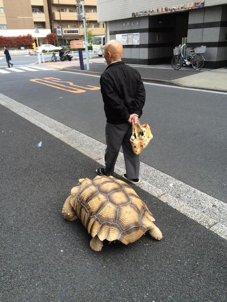 giant-tortoise-for-walk-tokyo-3