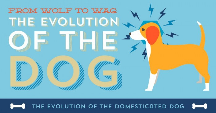 the-evolution-of-the-dog-fb