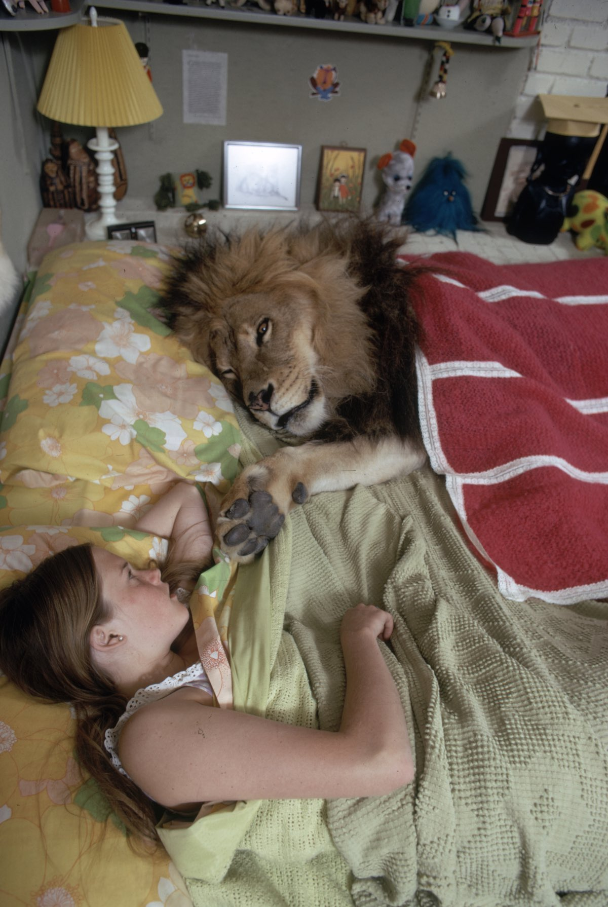 Subject: Pet Lion Neil sleeping with Melanie Griffith In the home of Noel Marshall and her Mom Tippi Hedren. Sherman Oaks, California 1971 Photographer- Michael Rougier Time INc Owned Merlin-1200544