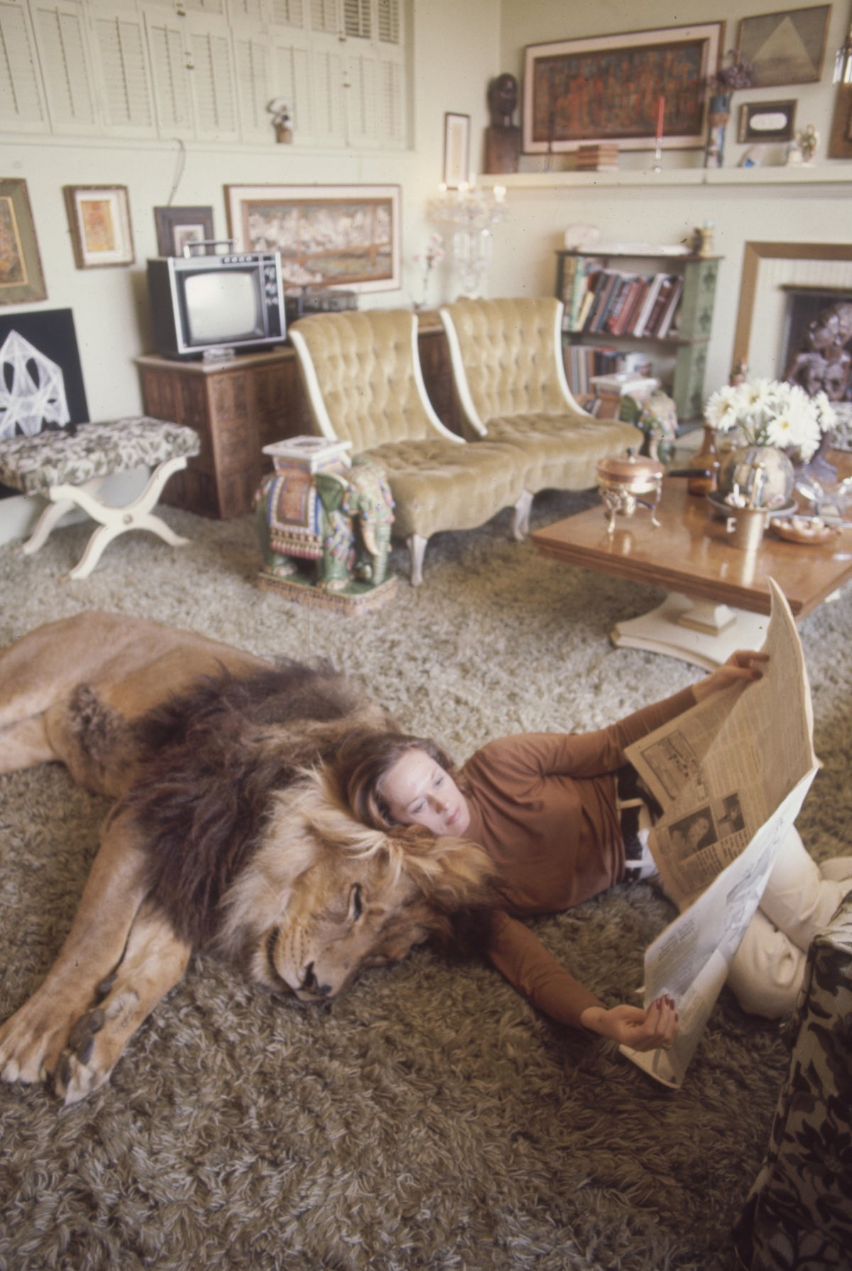 Subject: Tippi Hedren reading a newspaper with Neil the pet lion laying by her. Sherman Oaks, California May 1971 Photographer- Michael Rougier Time Inc Owned Merlin- 1200540